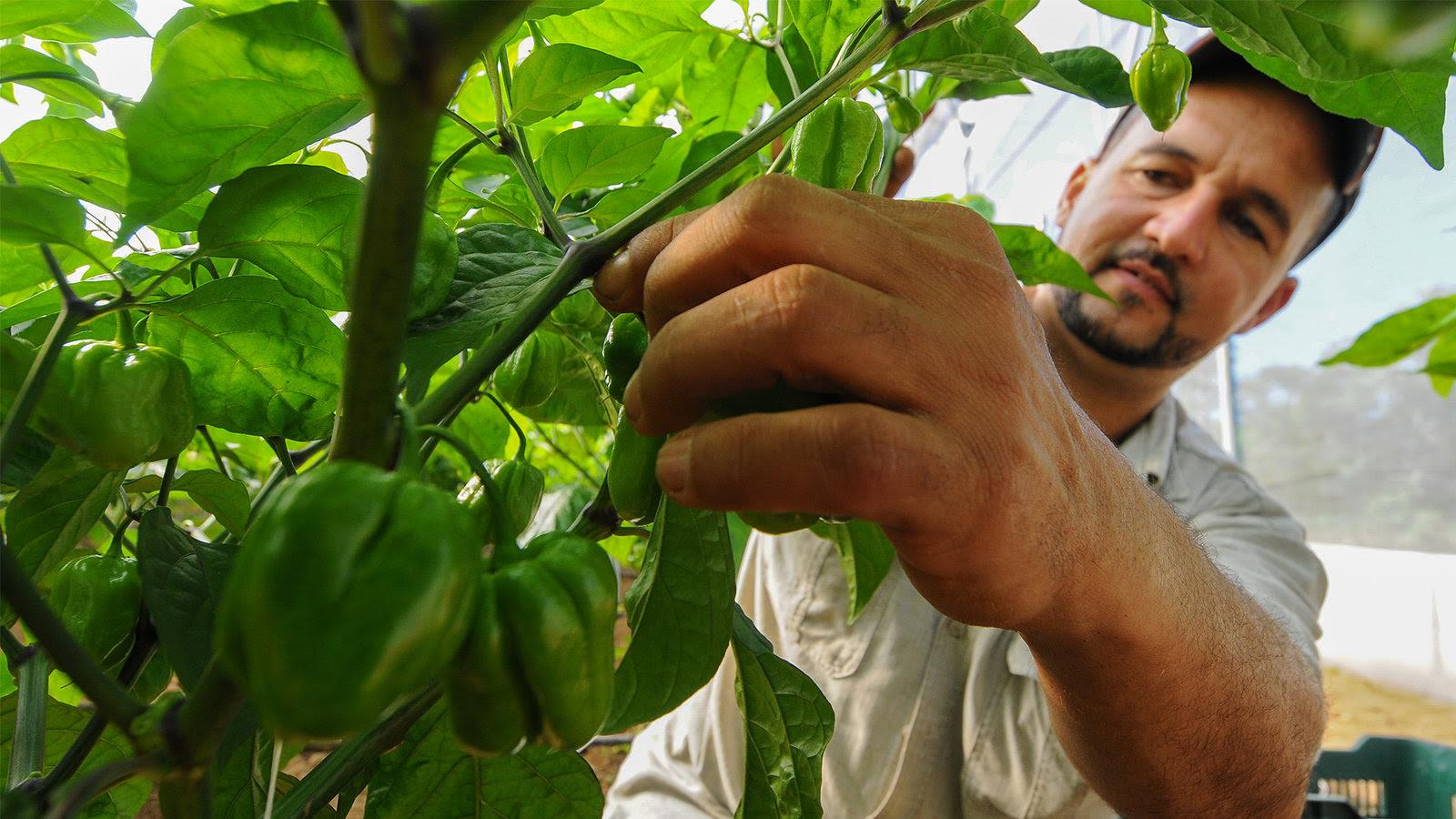 Gobierno celebra Día del Agricultor con crecimiento del campo y de la Patria; 85% de lo que consume población, se produce en el país