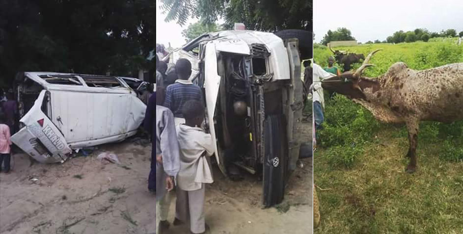 Cattle rustlers abandon cows, flee after getting involved in road accident