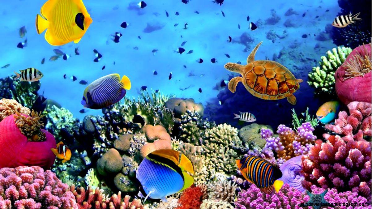 Fish Ocean Wallpaper