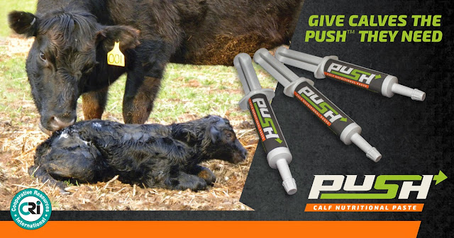 Push is an energizing paste for newborn or stressed calves. It gives calves the extra Push they need