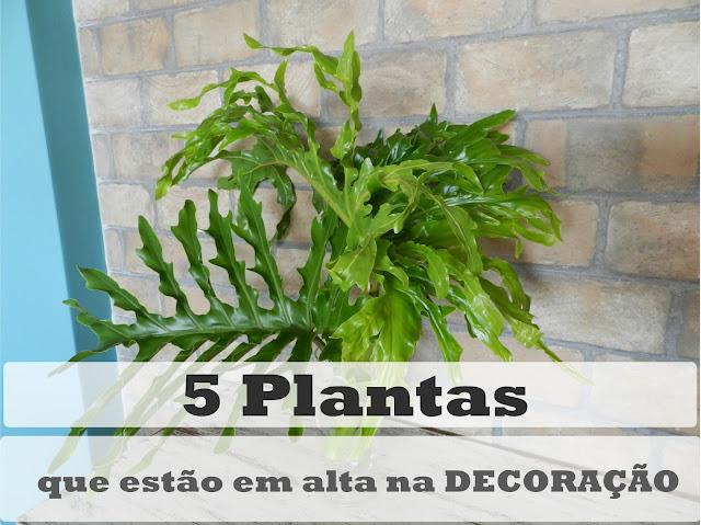 plantas da moda na decoração