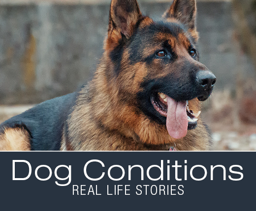 Dog Conditions: Real-Life Stories - When Symptoms Are Not What They Seem: Molly's Hemangiosarcoma
