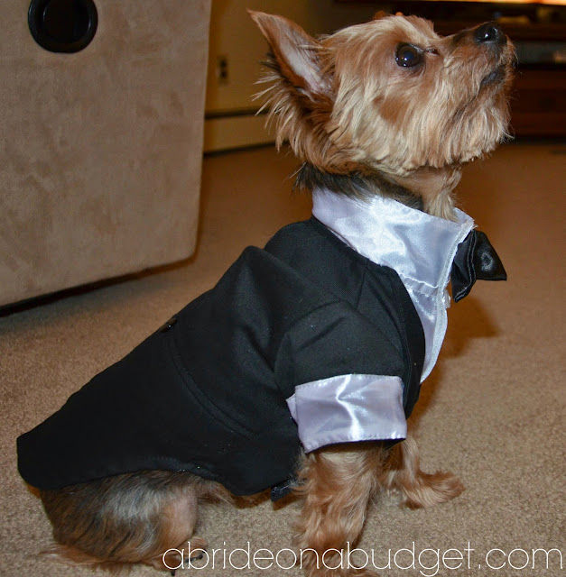 Do you have a furbaby? If you want to incorporate your pet into your wedding day, you definitely can! But you should read this post from www.abrideonabudget.com.