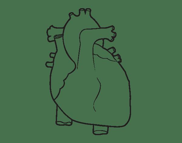 Manualidades con mis hijas: El sistema respiratorio y digestivo para ...