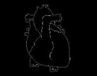 corazon-colorear-plantilla-preescolar