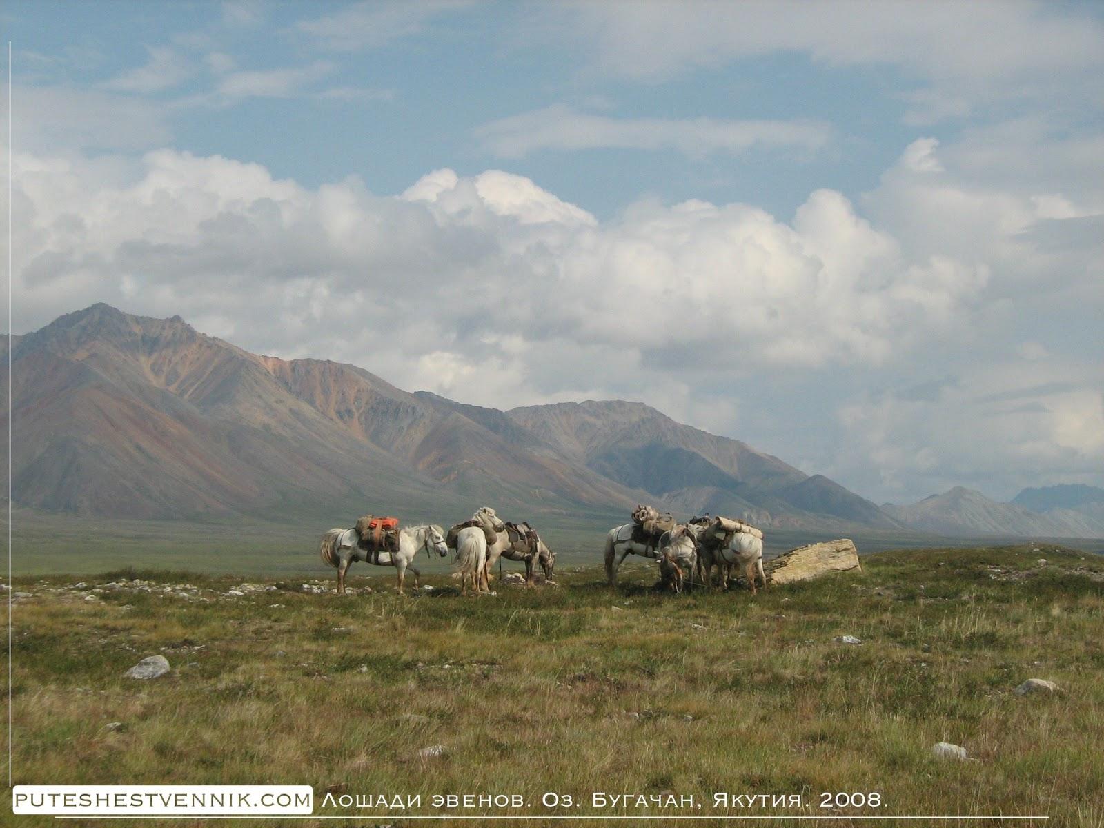 Лошади эвенов и горы в Якутии