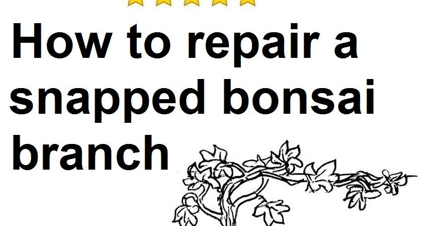 the little bonsai  how to repair a snapped bonsai branch