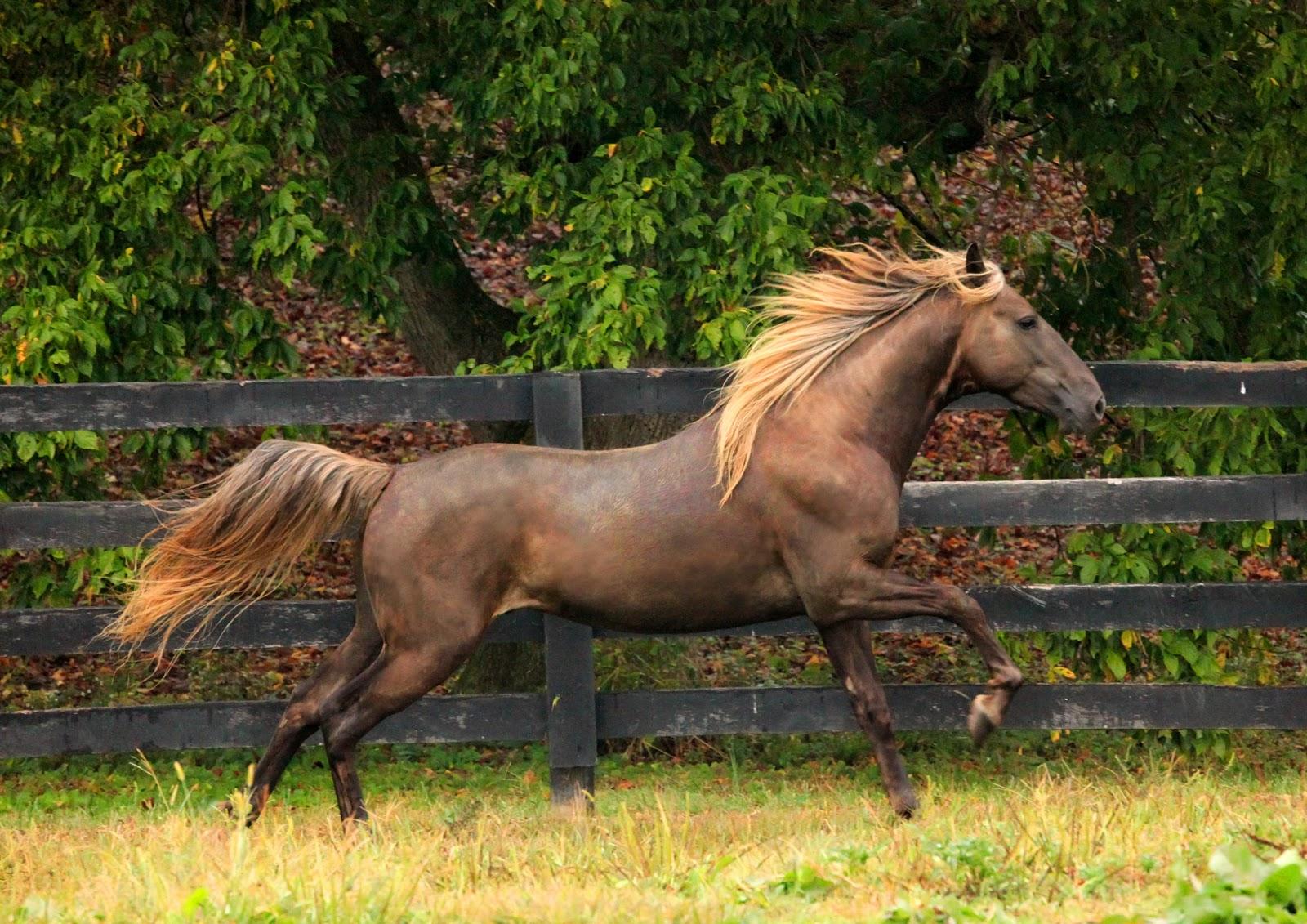 M O U N T A I N Herd (Horse RP)