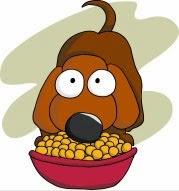 Votre animal mange trop et trop vite ? Vous avez un glouton !