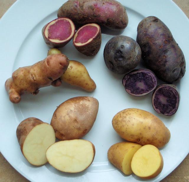 Highland Burgundy, Salad Blue, Mayan Gold, Golden Wonder and Pink Fir Apple. Potatoes supplied by Carrolls, apart from the Pink Fir Apples