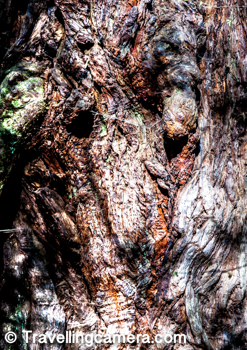 I loved capturing these beautiful textures on these Redwood trees of Muir Woods National Monument.