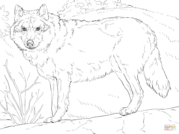 Click The Grey Wolf Coloring Pages