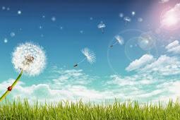 Pengertian dan Macam – Macam Angin
