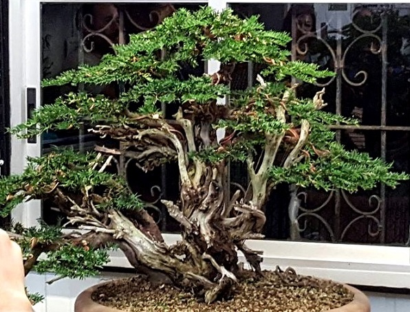 Propiedad de Bonsai Center Sopelana