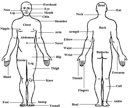 Human Body Parts Names in English and Hindi - List of Body