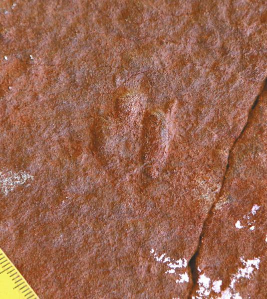 World's smallest dinosaur footprints found in Sichuan