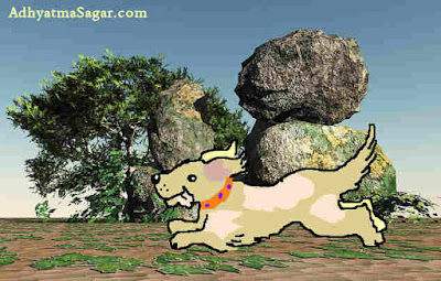 Dhobi dog running on ghat