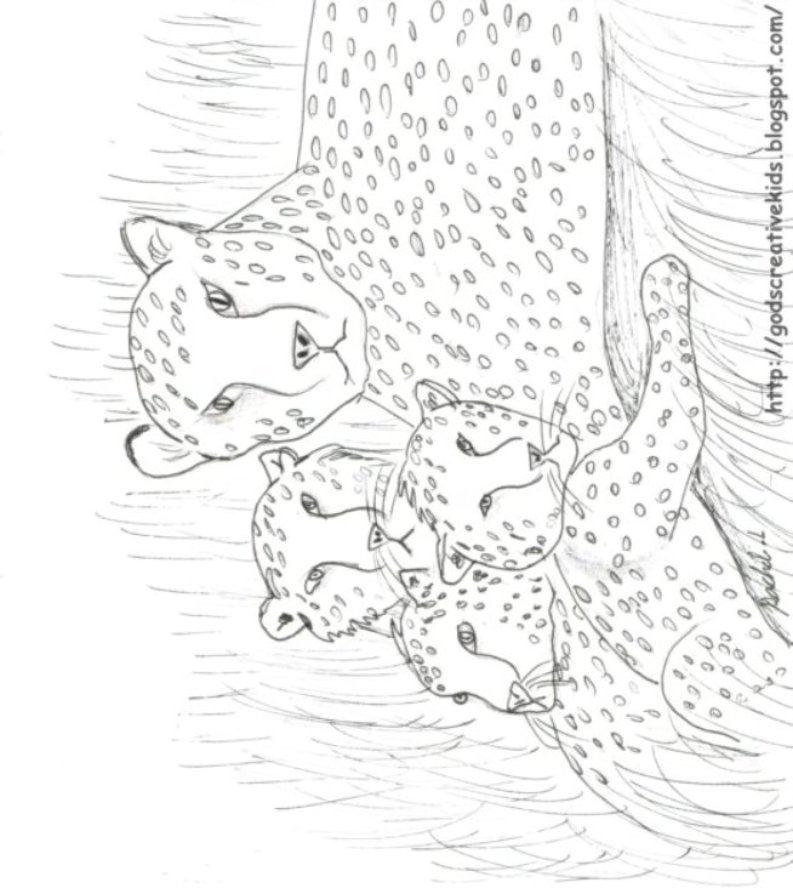 Ray-Chill's World: Cheetah: Family Love ~ Coloring Page