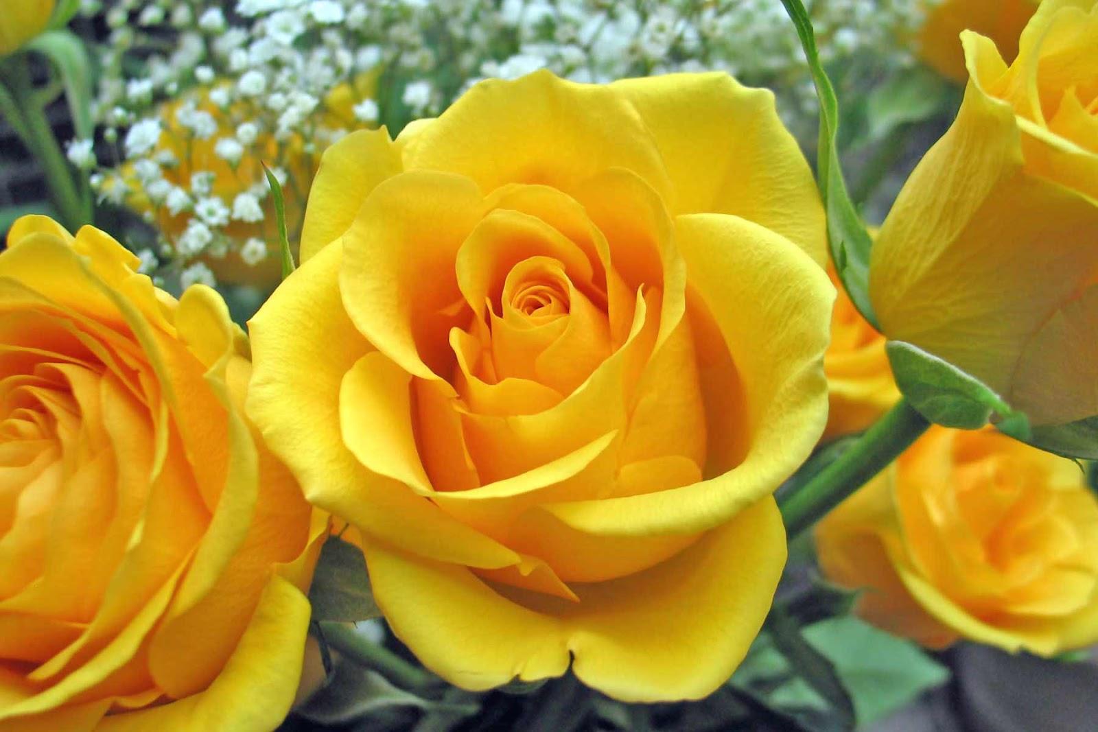 Warna Bunga Mawar Toko Bunga Jogja Florist Jogja