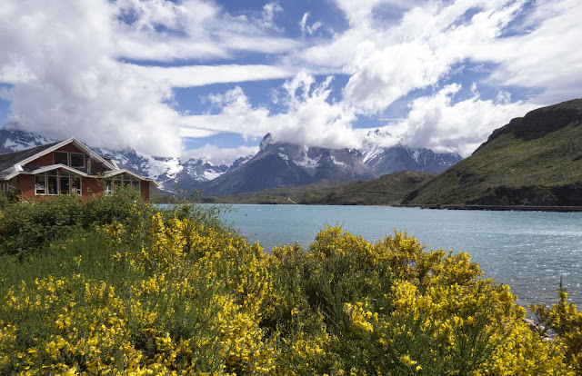 Yellow gorse and Hosteria Pehoe overlooking Lake Pehoe and mountains beyond in Torres del Paine National Park