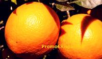 Logo Vinci gratuitamente una fornitura da 20 kg di Agrumi (limoni, pompelmi,arance, clementine)