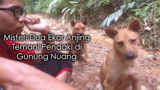 2 Ekor Anjing Misteri Muncul Saat Mendaki Gunung Nuang