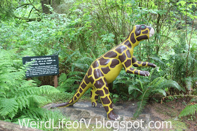 This Psittacosaurus statue at Prehistoric Gardens reminds me of a giraffe