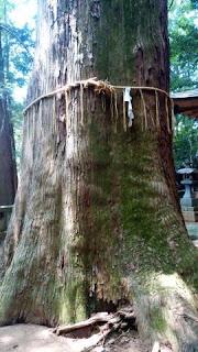 根小屋諏訪神社 御神木