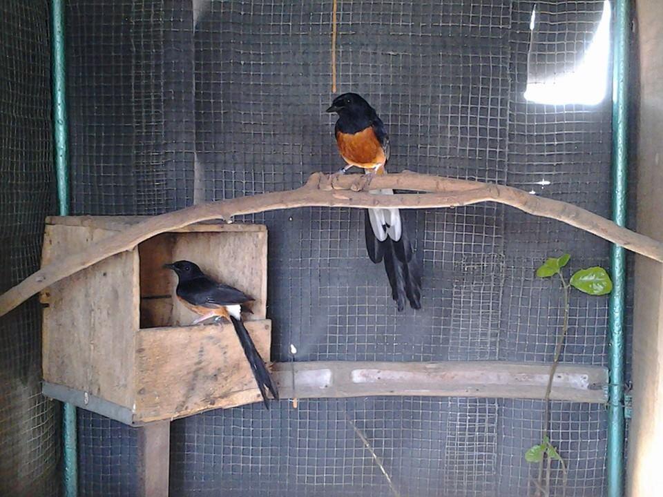 Beraneka Macam Daftar Burung Kicau Karena Harganya