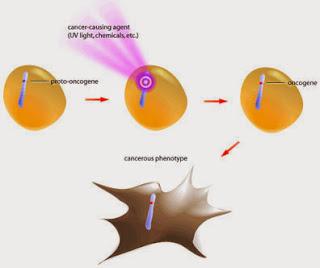 Resultado de imagen de oncogen
