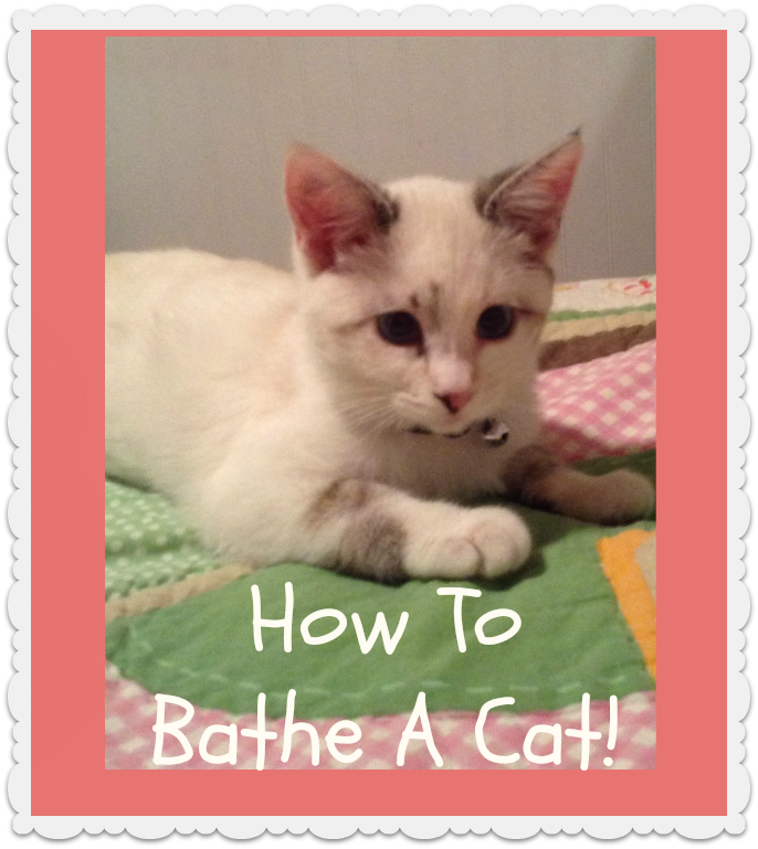 how to bathe a cat I've been a cat lover/owner for several years most of my felines hate water that's what makes a small spray bottle of tap water so efficient in training them to stay off the dining room table, or off the kitchen counters.