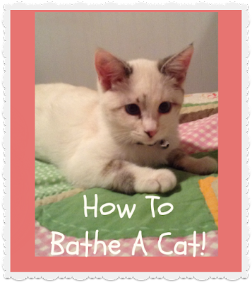 How to give a cat a bath, video tutorial