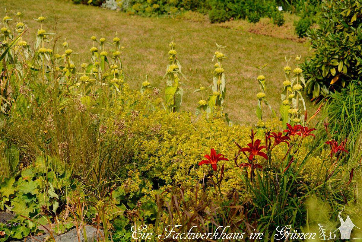 Stipa tenuissima, Alchemilla, Hemerocallis,  Phlomis russeliana