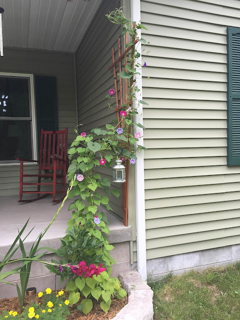 Building on Love: Morning Glory