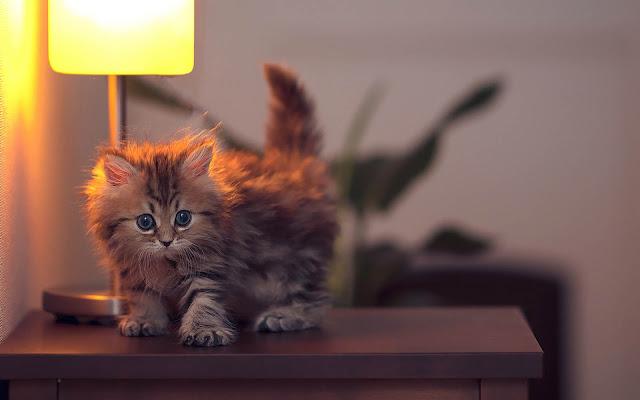 Jong katje op kast