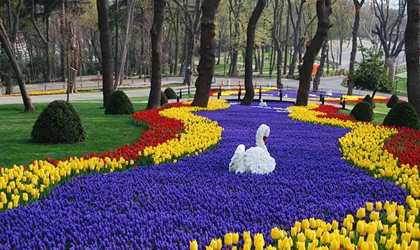 bunga tulip belanda anak rantau