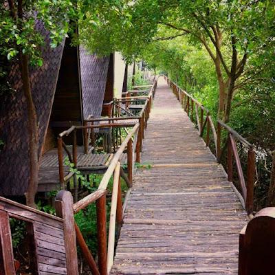 Foto Hutan Mangrove PIK