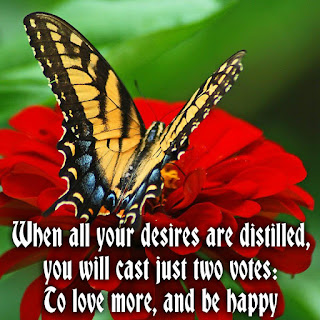 love and happiness quotes on image