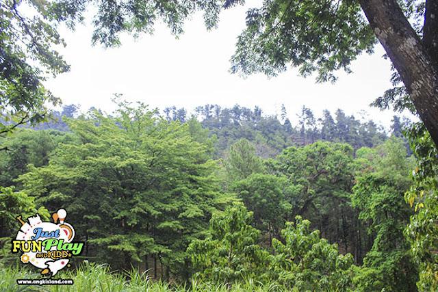 hutan nganjuk