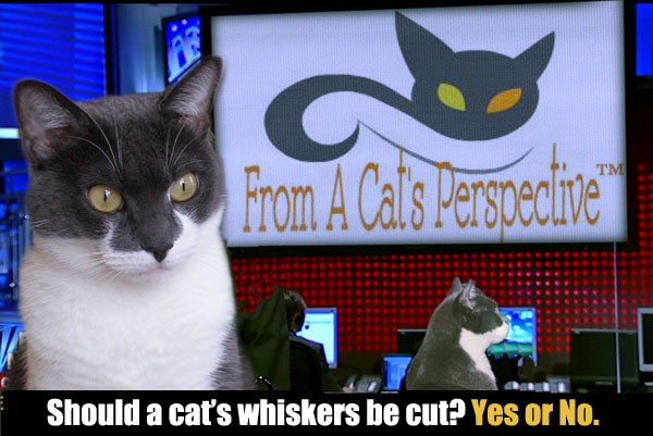 From a Cat's Perspective: Should A Cat's Whiskers Be Cut?