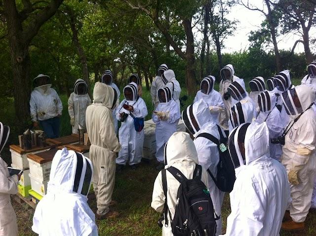 Προυποθέσεις για να γίνει κάποιος μελισσοκόμος: Για τους νέους μελισσοκόμους
