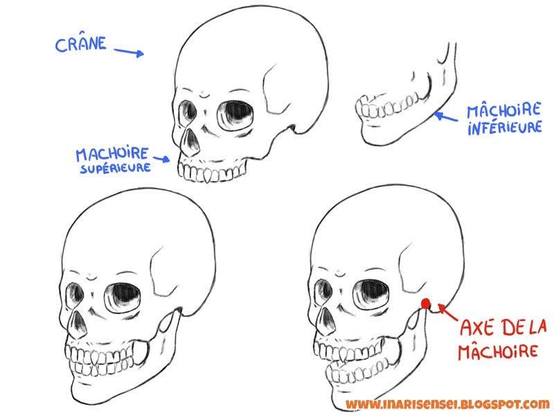 Articulation de la mâchoire inférieure sur le crâne