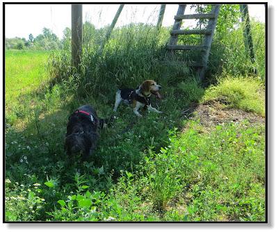 bei Hitze mit dem Hund eine Pause im Schatten machen