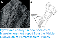 http://sciencythoughts.blogspot.co.uk/2016/05/dyrnwynia-conollyi-new-species-of.html