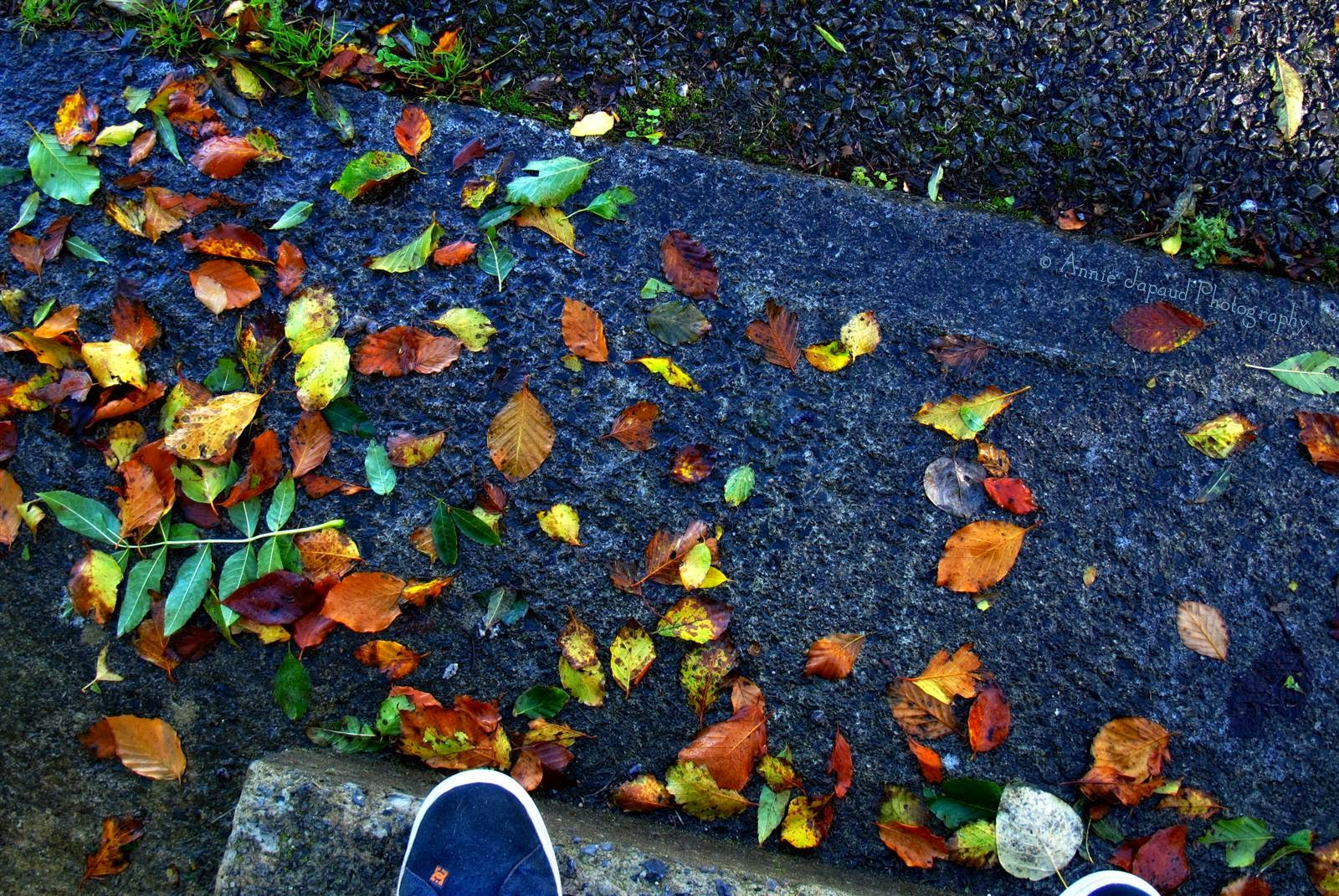 leaves, ground, door, autumn