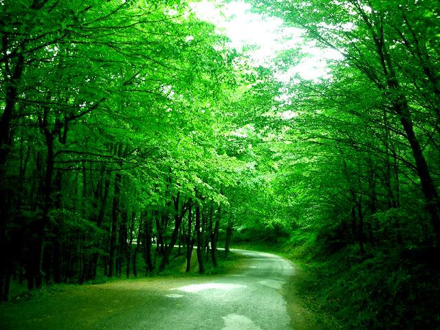 Yaşayan Tarih: Belgrad Ormanı.