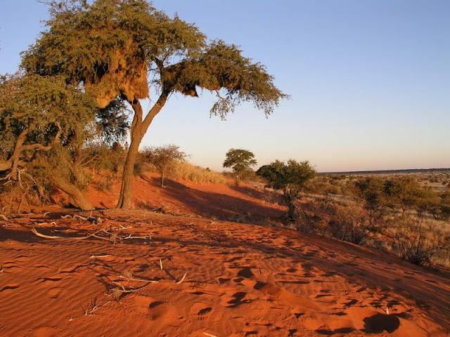 Deserto Kalahari Botswana