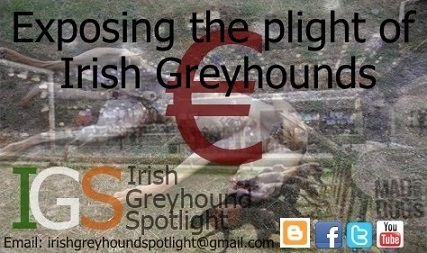 Irish Greyhound Spotlight