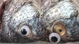Ιδιοκτήτης εστιατορίου κολλούσε ψεύτικα πλαστικά μάτια στα ψάρια για να φαίνονται φρέσκα