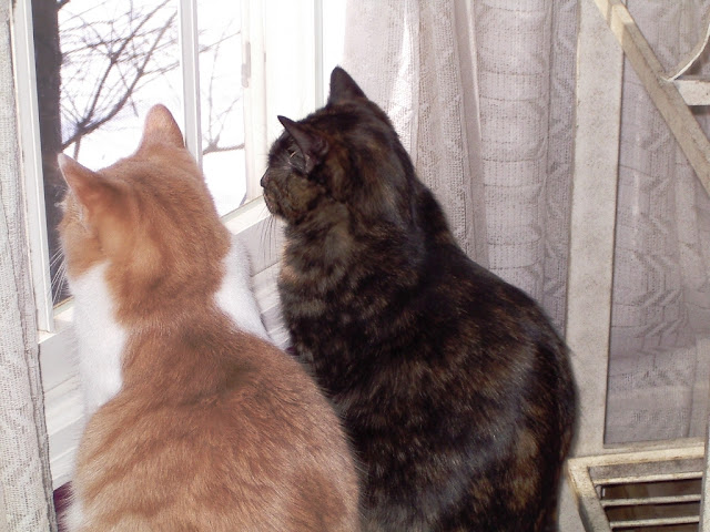 Paisley and Webster: a cream-and-white tabby and a tortoiseshell cat looking out a window together.